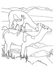 Alpaca Coloring Book Page