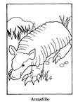 Armadillo Coloring Book Page