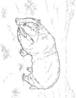 Badger Coloring Book Page