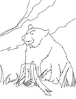 Grizzly Bear Coloring Book Page