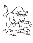 Bison Coloring Book Page