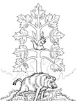 boar-coloring-pages-000