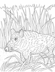 boar-coloring-pages-003