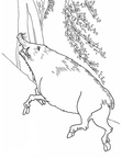 boar-coloring-pages-005