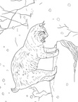 Bobcat Coloring Book Page