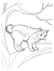 Abyssinian Cat Breed Coloring Book Page