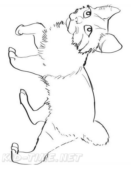American_Bobtail_Cat_Coloring_Pages_001.jpg