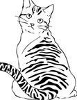 American Wirehair Cat Breed Coloring Book Page