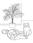 Birman Cat Breed Coloring Book Page