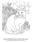Chartreux Cat Breed Coloring Book Page