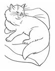 Chinchilla Persians Cat Breed Coloring Book Page