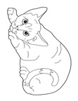 Cornish Rex Cat Coloring Book Page
