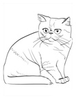 Exotic Shorthair Cat Breed Coloring Book Page