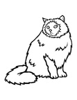 Himalayan Cat Breed Coloring Book Page
