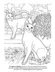 Japanese Bobtail Cat Breed Coloring Book Page