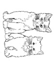 Javanese Cat Breed Coloring Book Page