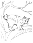 Manx Cat Breed Coloring Book Page