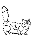 Munchkin Cat Coloring Book Page