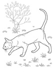 Oriental Shorthair Cats Coloring Book Page