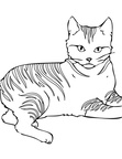 Pixie-bob Cat Coloring Book Page
