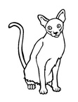 Singapura Cat Coloring Book Page