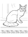 Somali Cat Breed Coloring Book Page