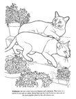 Tonkinese Cat Breed Coloring Book Page