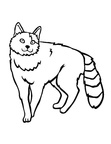Turkish Van Cat Coloring Book Page