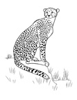 Cheetah Coloring Book Page
