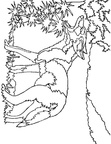 Coyote Coloring Pages 021
