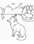 Coyote Coloring Pages 027