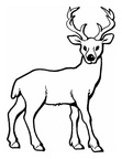 Deer Coloring Pages 021