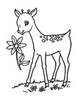Baby Deer Fawn Coloring Book Page