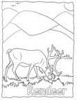 Reindeer / Caribou Coloring Book Page