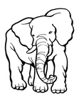 Elephant Coloring Book Page