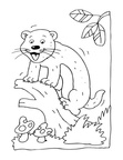 Ferret Coloring Book Page