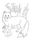 Fox Coloring Book Page