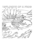 Frog Life Cycle Coloring Book Page