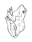 Realistic Frog Coloring Book Page