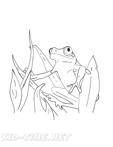 Realistic_Frog_Coloring_Pages_055.jpg
