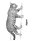 Jaguar Coloring Book Page