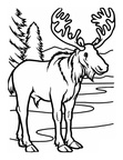 Moose Coloring Book Pages Coloring Book Page